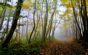 foresta, alberi, traccia, autunno