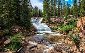 river, forest, nature