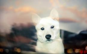 cane, cucciolo, vista