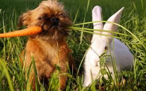 verde, erba, carota, cane, cane, bianco, coniglio