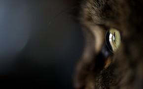 gatto, gatto, Kote, Macro, occhio, lana, sfondo nero