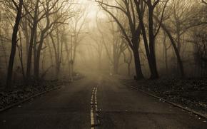 natura, strada, mattina, nebbia, parco, autunno