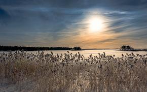 朝, 冬, 湖, 葦