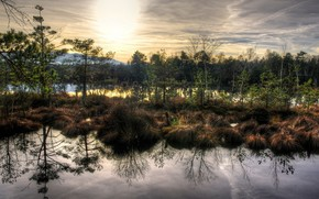 water, nature, swamp, grass, dry, autumn, smooth surface, reflection