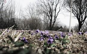 fiori, natura, makrosemka