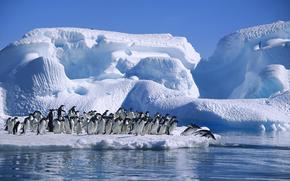 adelie penguin, antarctica, sea, ice