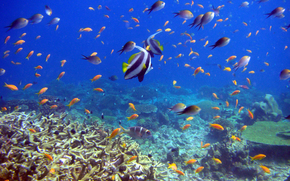 рыбы, кораллы, подводный мир, reef and fish