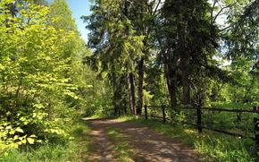 vero, floresta, estrada, natureza