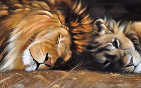picture, Art, lion, lioness, mane, animals, Cats, wild, Predators, sleep