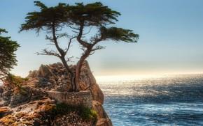 岩石, 树, 海, 天空