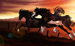 Art, Horses, fence, jump, sunset, barbed wire