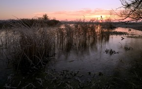 sunset, river, cane, nature