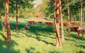 immagine, paesaggio, estate, villaggio, foresta, prato, pascolo, Mucche, alberi, casa, recinto
