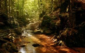 fiume, piccolo fiume, macchia, macchia, foresta, sole