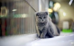 猫, 看, 房子