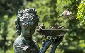 Passeri, fontana, Uccelli