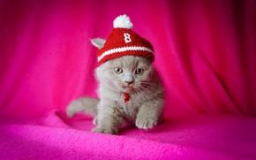 котёнок, шапочка, розовый фон