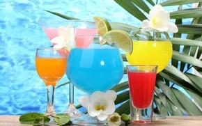 calici, vetro, Cocktails, bevande, fiori, calce