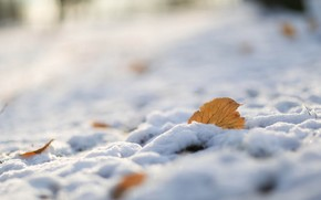 лист, снег, природа, макро