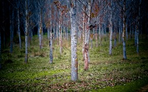 alberi, natura, paesaggio