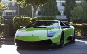 Lamborghini, mursielago, verde, parcheggio, ombra, recinto, cespuglio, Lamborghini