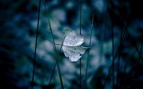 лист, природа, макро