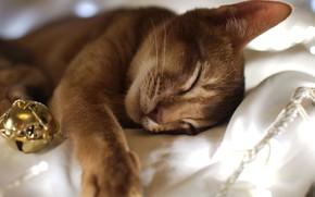 кошка, кот, спит, сон, ткань, гирлянда, шарик, новый год