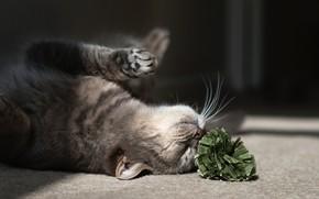 cat, cat, game, on the floor, flower