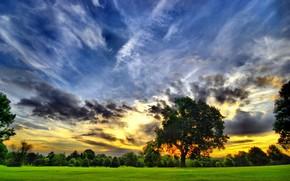 закат, небо, яркие краски, дерево, крона, поле