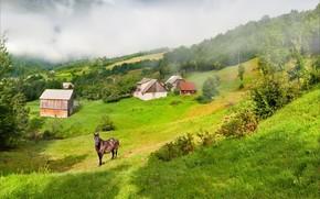 склон, туман, сопки, дома, лошадь, трава