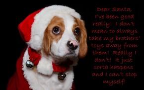 собака, праздник, пмсьмо