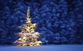 natura, paesaggio, neve, alberi, inverno, notte, Natale, Capodanno