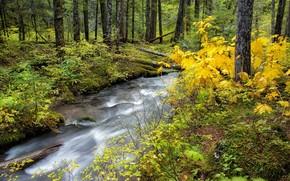 лес, река, пейзаж