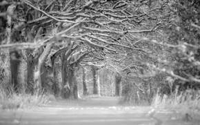 inverno, rvores, neve