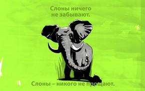 elephant, slonische, large, beauty weight, slonyara