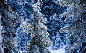 сказочный, 冬季, 森林, 树, 美化, 冬季, 雪, 漂移