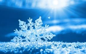 snow, snowflake, sun, rays