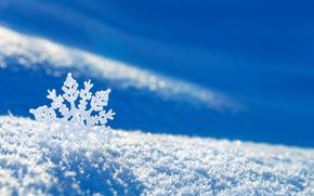snowflake, snow, Winter