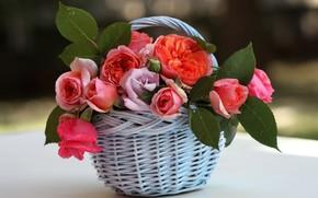 cestino, Roses, fogliame, fiori