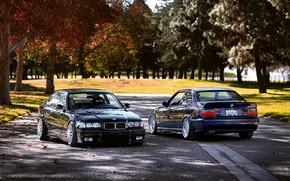 BMW, natura, Sintonia, BMW