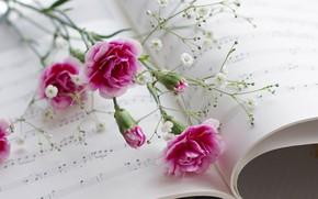 Flores, Clavo, Pgina, msica