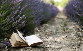 libro, fiori, Lavanda, sfondo