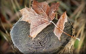 пень, природа, лист, сухой, осень, иней