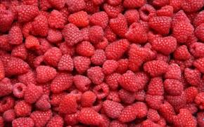 food, raspberry, Berries, many