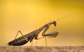 escarabajo, Macro