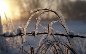 canna, gelo, tramonto, natura