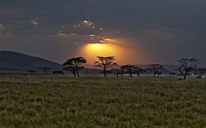 Африка, Кения, саванна, закат