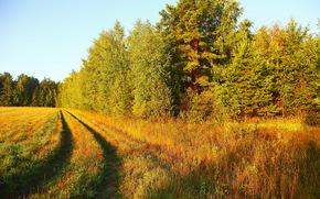 landscape, grass, nature, road