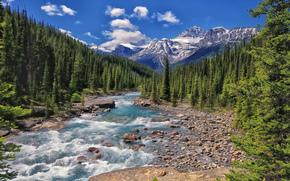 mistaya river, banff national park, alberta, canada, Национальный парк Банф, Альберта, Канада, река, горы, лес