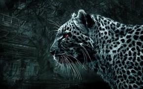 Картинка, дикая кошка, леопард, смотрит, красные глаза, черно белая картинка